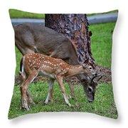 5095 Throw Pillow