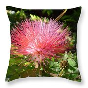 Australia - Red Caliandra Flower Throw Pillow