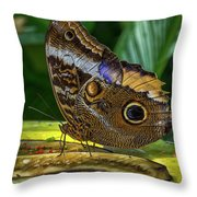 5113- Butterfly Throw Pillow