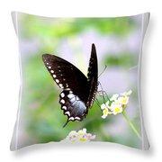 5276-001- Butterfly - Swallowtail Throw Pillow