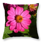Caravan Of Dreams Throw Pillow