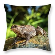Amphibian, Common British Toad / Frog Throw Pillow