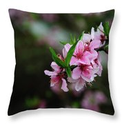 Blossoming Peach Flowers Closeup Throw Pillow