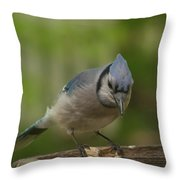 Bluejay Throw Pillow