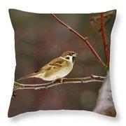 Eurasian Tree Sparrow Throw Pillow