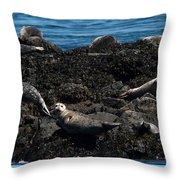 Clear Day Barn Throw Pillow