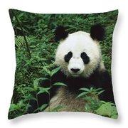 Giant Panda Ailuropoda Melanoleuca Throw Pillow