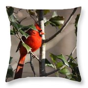 Img_0001 - Northern Cardinal Throw Pillow