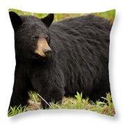 Maine Black Bear Throw Pillow