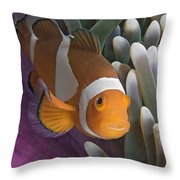 Malaysia, Marine Life Throw Pillow