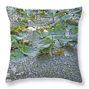 6 Mile Swamp Throw Pillow