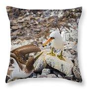 Nazca Booby In Galapagos Throw Pillow