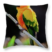 Parrot Throw Pillow