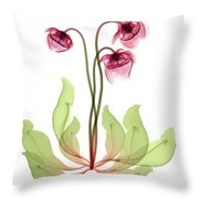Pitcher Plant Flowers, X-ray Throw Pillow