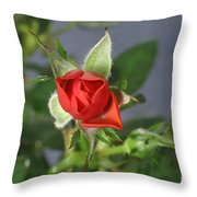 Red Rose Blooming Throw Pillow