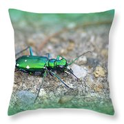 6-spotted Green Tiger Beetle Throw Pillow