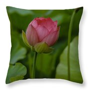 65 Throw Pillow
