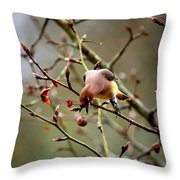 6634-002 - Cedar Waxwing Throw Pillow