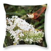 Clearwing Hummingbird Moth Throw Pillow