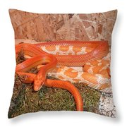 Corn Snake Throw Pillow