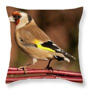 European Goldfinch Bird Close Up   Throw Pillow