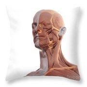 Facial Muscles Throw Pillow