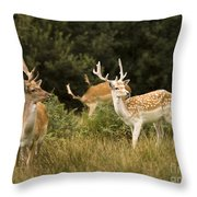 Fallow Deer Throw Pillow