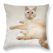 Flame Point Siamese Cat Throw Pillow