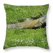 I Iguana Throw Pillow