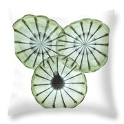 Opium Poppy Pods, X-ray Throw Pillow