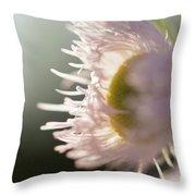 Pastel Purple Flowers Throw Pillow