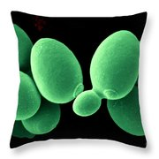 Saccharomyces Cerevisiae Throw Pillow