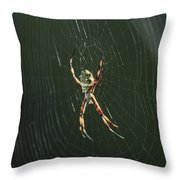 Spider On A Web Throw Pillow