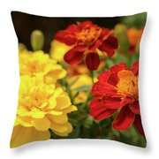 Tagetes Patula Fully Bloomed French Marigold At Garden In Octob Throw Pillow