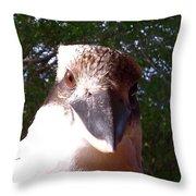 Australia - Kookaburra Stickybeak Throw Pillow