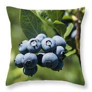 Blueberry Bush Throw Pillow