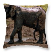 Botswana Throw Pillow