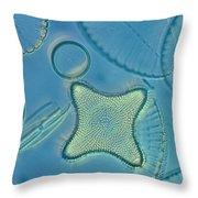 Close View Of Diatoms Throw Pillow