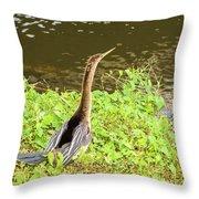 Female Anhinga Throw Pillow