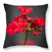 Jatropha Blossoms Painted  Throw Pillow