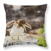 Juvenile Nazca Booby In Galapagos Throw Pillow