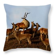 Red Deer In The Highlands Throw Pillow