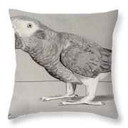 Timneh Grey Parrot Throw Pillow