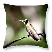 8181-001 - Ruby-throated Hummingbird Throw Pillow