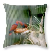 Australian Native Animals Throw Pillow
