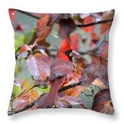 8623-001 - Northern Cardinal Throw Pillow