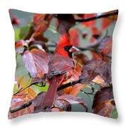 8624-001 - Northern Cardinal Throw Pillow