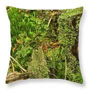 Mosses And Liverworts 8861 Throw Pillow