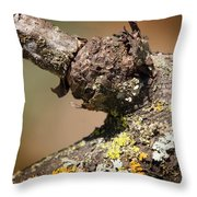 Bare Tree Branches In Early Spring Throw Pillow