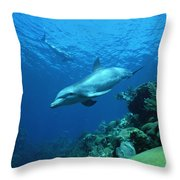 Bottlenose Dolphin Tursiops Truncatus Throw Pillow